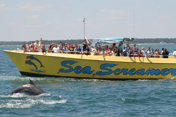 Photo Gallery Myrtle Beach Dolphin Cruises