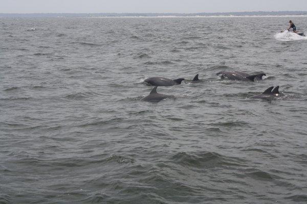Myrtle Beach Dolphin Cruises Photo Gallery